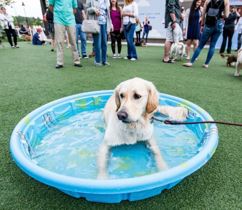 MarketStreet Lynnfield will host its first Yappy Hour of the season May 22.